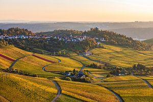 Wijngaarden in de herfst bij Stuttgart-Rotenberg van