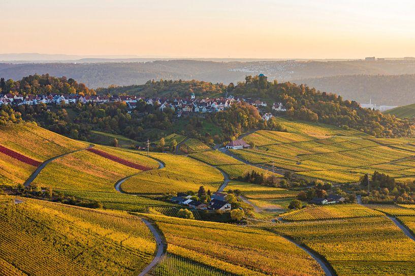 Weinberge im Herbst bei Stuttgart-Rotenberg von Werner Dieterich