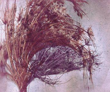 Samenstand - abstrakt von Christine Nöhmeier