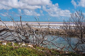 Romantischer Blick auf die Salzseen von Bonaire von Alie Messink