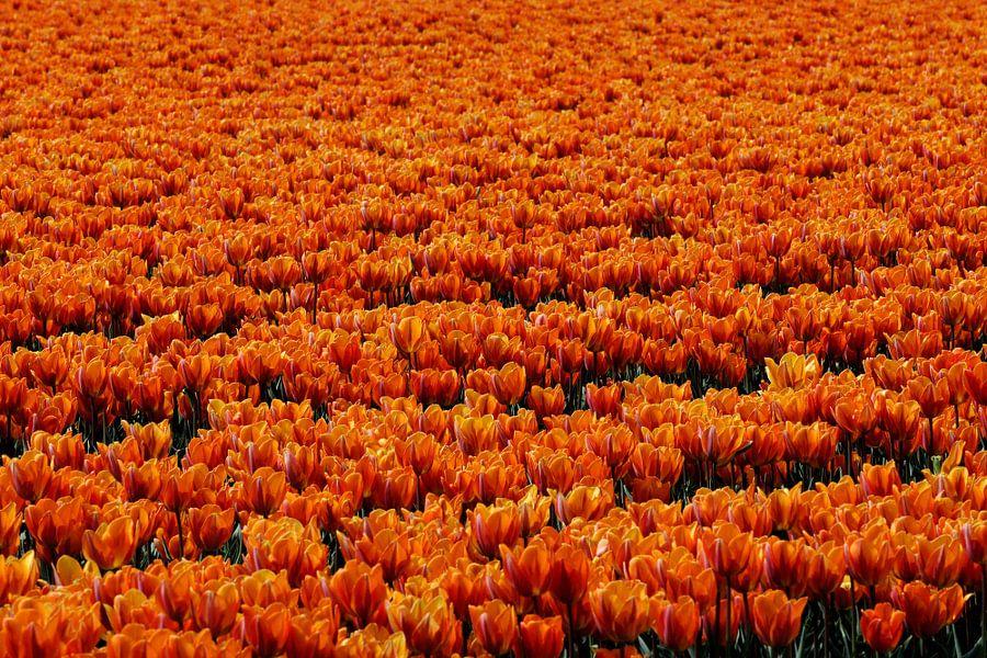 Orange Seven