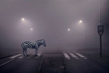 Zebra op de zebra van Elianne van Turennout