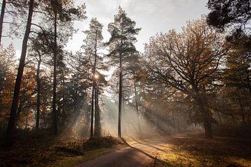 Sonnenstrahlen von Henrico Fotografie