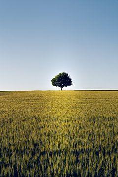 Allein stehender Baum im Feld von Christian Klös