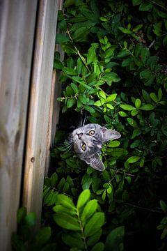 Curious Cat  van Tim Stoppels