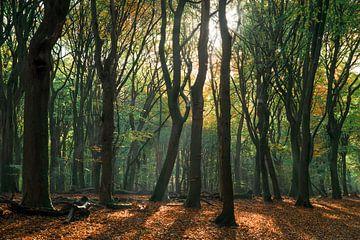 Dansende bomen van Joris Pannemans - Loris Photography
