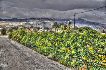 Sinaasappelenveld van Tom Hendrikx