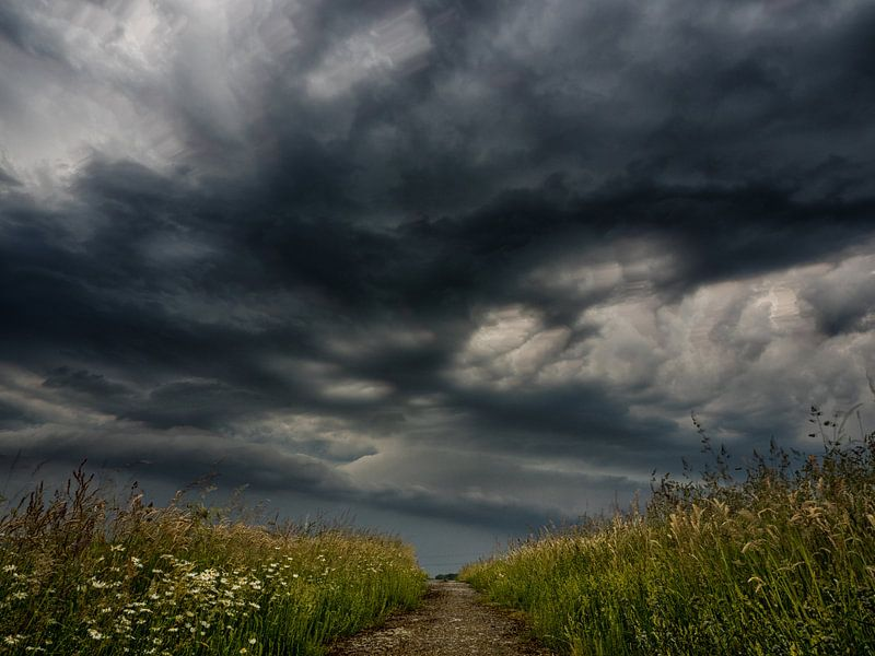 Calm before the storm van Lex Schulte