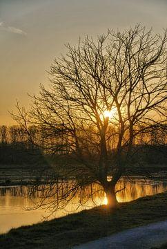 Een boom tegen de ondergaande zon van Jurjen Jan Snikkenburg