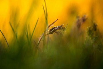 plantje in het gras van Frank Ketelaar