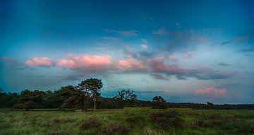 Blauw uurtje boven alleenstaande boom van Holland Air Photo