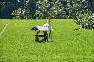 Sawah auf Bali von Eduard Lamping