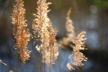 Grassen aan het meer van Thomas Jäger