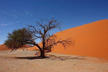 NAMIBIA ... Namib Desert Tree III von Meleah Fotografie