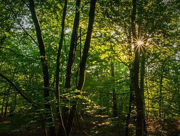 Morgensonne durch die Bäume von Arjanne Gols