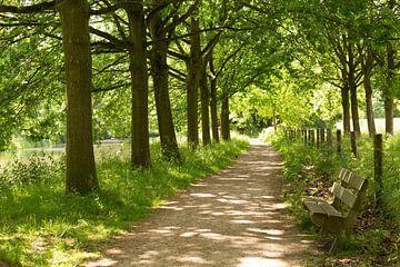 Jaagpad langs de Kromme Rijn bij landgoed Amelisweerd