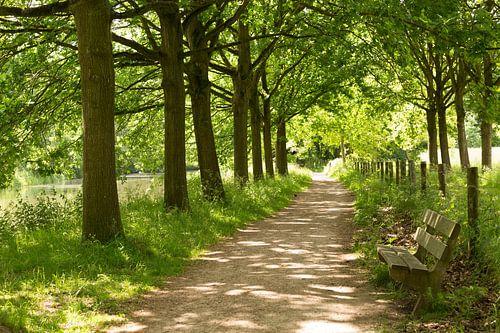 Jaagpad langs de Kromme Rijn bij landgoed Amelisweerd van