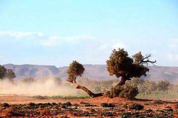De woestijnbomen van jan katuin