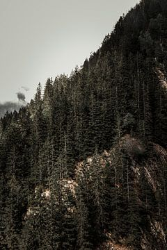 Bäume gegen den Fels von Tom Paquay