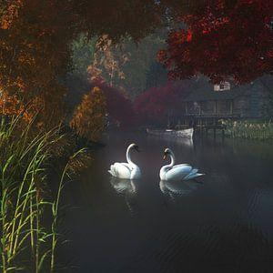 Dierenrijk – Zwanen in een rivier in de buurt van huis