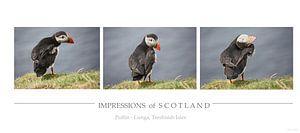 [impressions of scotland] - puffin trilogie
