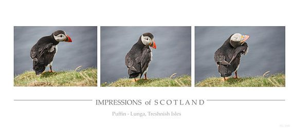 [impressions of scotland] - puffin trilogie van Meleah Fotografie