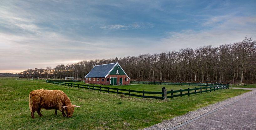 Hooglander met rovershut texel van Texel360Fotografie Richard Heerschap