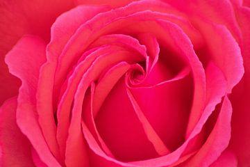 Bezaubernde Rose als Symbol für die Liebe als Hingucker an Deiner Wand von Christian Feldhaar
