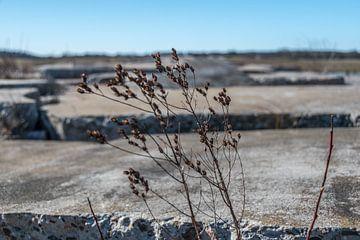 Leven tussen betonschotsen von Inge Heeringa