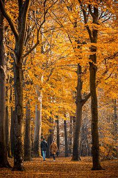 Boswandeling in de herfst van Fotografie Jeronimo