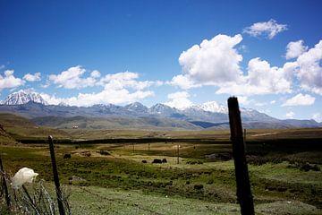 Groene graslanden in Sichuan en bergen met ijstoppen von André van Bel