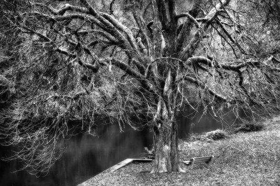 Grillige boom zwart-wit