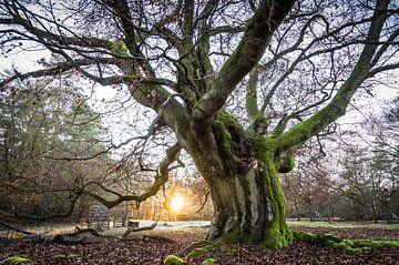 Coucher de soleil sur le vieil arbre sur Jürgen Schmittdiel Photography