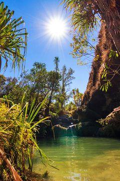 La piscine naturelle van Dennis van de Water