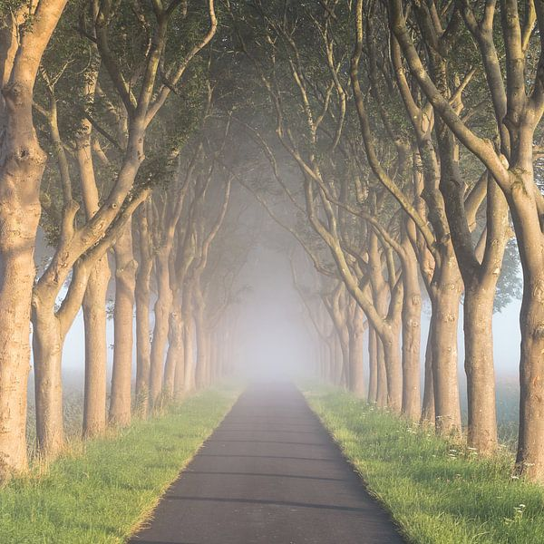 """The road to nowhere"" van Karel Ton"