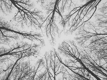 Bomen vanuit een ander perspectief. van