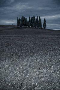 Cipressi di San Quirico d Orcia. . Het cipressenbos in Toscane van