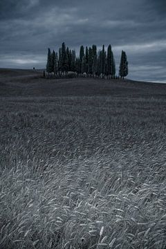 Cipressi di San Quirico d Orcia. Cipressenwald im Toskane von Dennis Wierenga