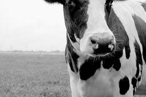 Cow van