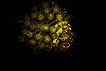 Vlieg bij bloem van Roel Verver