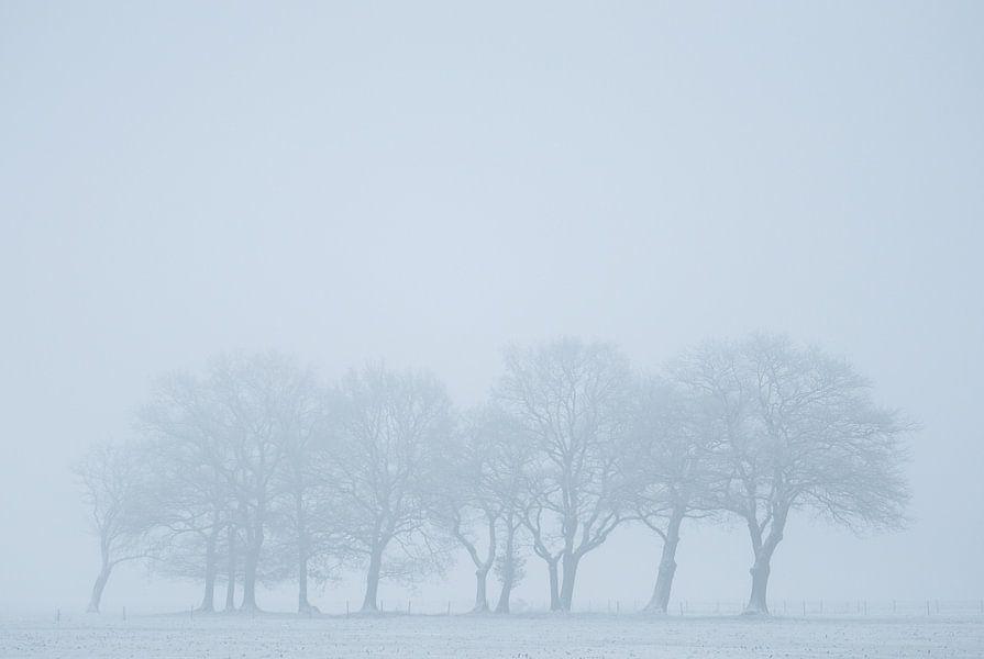 Trees trying to hide van Martijn Schornagel