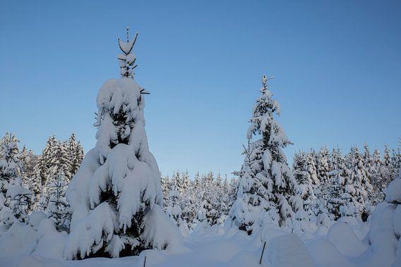 Winterwunderland im Garten und Wald mit Schnee