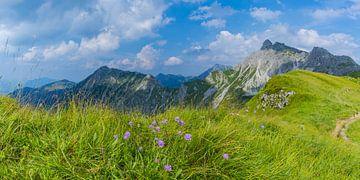 Alpenbloemen van Walter G. Allgöwer