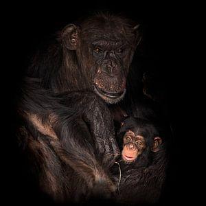 Mutter und Kind Schimpanse