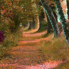 Weg im Park von Andrea Meister