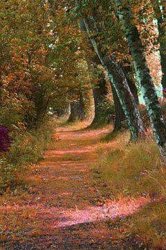 wandelen in het park van Andrea Meister