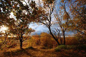 Herfst in het Zwanenwater