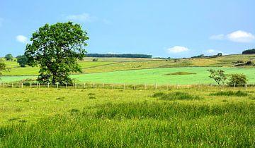 Liebliche Szene in Northumberland von Gisela Scheffbuch