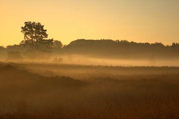 gouden zonsopkomst van Jeroen Grit