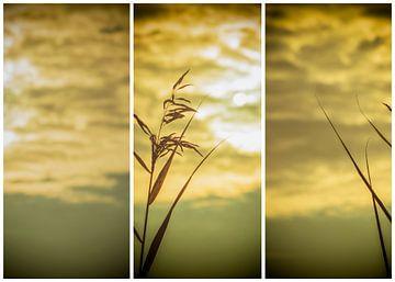 lauwersmeer triptychon 4 von anne droogsma